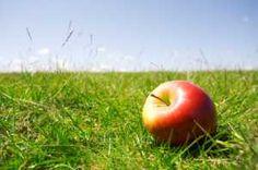 Google Image Result for http://www.farmerspal.com/images/apple-pic.jpg
