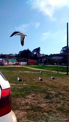 Costa de la V región. Chile on Behance Costa, Baseball Field, Chile, Behance, Ribs, Beach, Chili, Baseball Park, Chilis