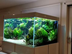 Live Aquarium, Aquarium Ideas, Aquarium Design, Saltwater Aquarium, Planted Aquarium, Freshwater Aquarium, Aquarium Fish, Fish Aquariums, Aquascaping