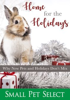 Chinchillas, Hamsters, Gerbil, Guinea Pigs, Rabbits, The Selection, Holidays, Pets, Animals