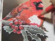 Painting a Day Demonstration - Cardinal Bird by Roberta Roby Baer PSA.