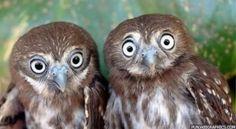 twin-owls-copy.jpg (600×330)