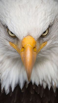 Unique and Creative Best Birds of Prey Photos, Images and . - Unique and Creative Best Birds of Prey Photos, Images and Photos Eagle Images, Eagle Pictures, Bird Pictures, Nature Animals, Animals And Pets, Cute Animals, Beautiful Birds, Animals Beautiful, Beautiful Pictures