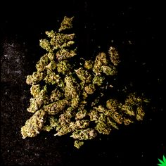 Cannabis Destiny Logo #weed #marijuana #cannabis #macro