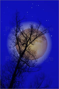 Beautiful tree in the moonlight