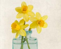 "Fine Art Flower Photography Print """"Yellow Daffodils No. 7"""""