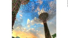 Image result for singapore cooling canopy