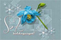 # Hanukkah, Congratulations, Wreaths, Pink, Decor, Quotes, Quotations, Decoration, Door Wreaths