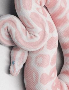 Pink and white exotic snake