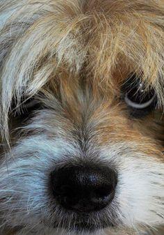 """No words"":) #dog"