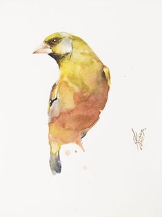 Greenfinch, Bird Artwork, Paper Tags, Paintings For Sale, Beautiful Birds, Trees To Plant, Watercolor Paper, Lovers Art, Pet Birds