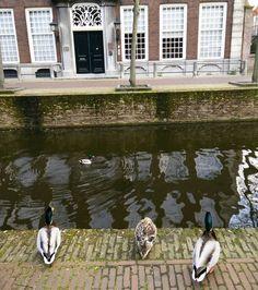 Langs de gracht #lazy #sunday #canal #grachten #animallover #eendjes #duckies #hartjedelft #delft