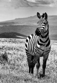 Tanzania by peo pea                                                                                                                                                                                 More