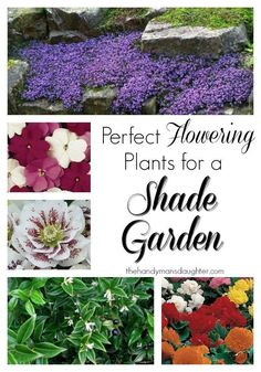 Forget the hostas and ferns! These beautiful flowers will give you the color you crave in your shade garden. - http://thehandymansdaughter.com
