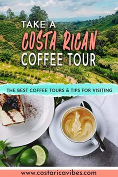 In Costa Rica you can actually tour a coffee farm. At these tours you will learn all about the history of coffee, the production process, and you can drink tons of delicious coffee. Coffee Farm, Coffee Coffee, Costa Rica Coffee, San Jose International Airport, San Jose Airport, New England Aquarium, Uganda Travel, Great America, Small White Flowers