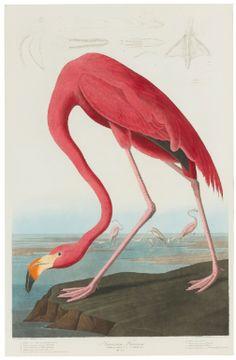 John James Audubon (After) - Sotheby's