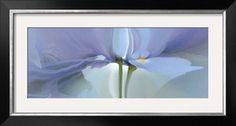Iris XX Print by Huntington Witherill at Art.com