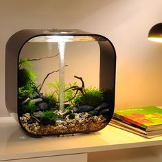 rundes nano aquarium design klein goldfische geil pinterest aquarium nano aquarium and design. Black Bedroom Furniture Sets. Home Design Ideas