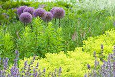 Perennials Zone 7 | perennial flowers zone 5