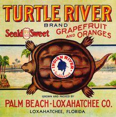 Turtle River Citrus Fruits. #crateart