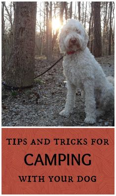 good ideas for camping with your dog