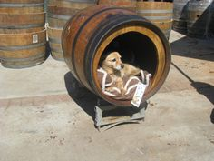 crafting with old bed springs | Wine Barrel Pet House/Bed by KingBarrel