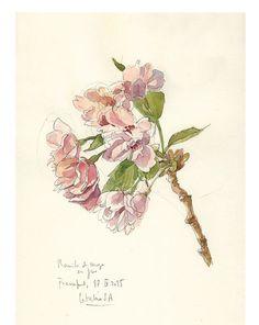 Kirsche Blüte #2 Aquarell Bleistift Zeichnung, botanische PRINT der blühenden…