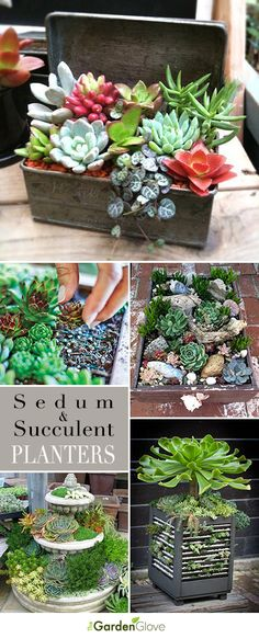 Garden Landscaping Walkways Sedum and Succulent Planters Tips Ideas and Tutorials! Landscaping Walkways Sedum and Succulent Planters Tips Ideas and Tutorials! Indoor Succulent Planter, Succulent Gardening, Garden Plants, Container Gardening, Indoor Plants, House Plants, Succulent Terrarium, Organic Gardening, Succulent Ideas
