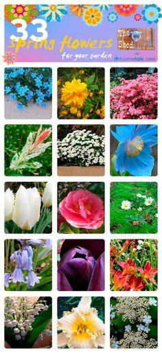 33 Spring Flower Ideas for your Garden!