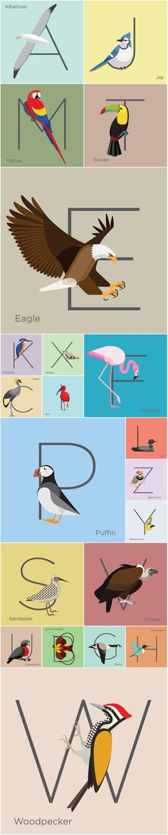 AlphabirdZ by Edwin Poh, via Behance Bird Illustration, Illustrations, Tropical Birds, Bird Prints, Bird Art, Typography Design, Lettering, Book Design, Art Lessons