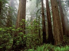 north american forests - Google Search