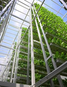 Vertical Farming -- Feeding the Cities of the Future? by Ravindra Krishnamurthy. The Cook's Cook - June/July 2015 - Page 41-42