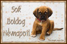Name Day, Names, Birthday, Dogs, Animales, Birthdays, Saint Name Day, Pet Dogs, Doggies