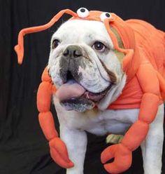 #joescrabshack. lobster