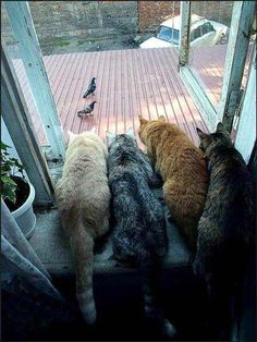 Funny Animal Pictures - View our collection of cute and funny pet videos and pics. New funny animal pictures and videos submitted daily. I Love Cats, Crazy Cats, Cool Cats, Funny Cats, Funny Animals, Cute Animals, Amor Animal, All About Cats, Funny Animal Pictures