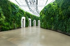 "restroom hallway in Longwood's new East Conservatory Plaza. It is the largest ""living wall"" in North America, and was designed by famed British landscape architect Kim Wilkie."