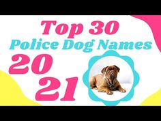 Best Police Dog Names ! Most Popular Male and Female Dog Names With Meaning 2021 - YouTube Cute Names For Dogs, Best Dog Names, Pet Names, Best Dogs, Cute Dogs, Police Dog Names, Police Dogs, Female Dog Names, Celebrity Dogs
