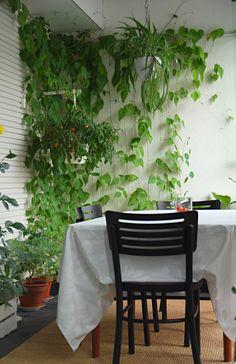 Tällä hetkellä parvekkeella näyttää tältä.Pelargoni kukkii isossa ruukussa (kuvan vasemmassa alanurkassa). Pelargonin takana pylväässä kie...