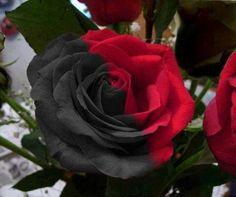 Sophisticated Black Flowers