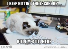 I keep hitting the escape key, but I'm still here