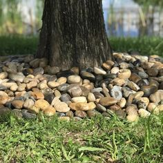 River Rock Landscaping, Landscaping Around Trees, Stone Landscaping, Landscaping With Rocks, Front Yard Landscaping, Landscaping Ideas, Backyard Patio, Decorative Rock Landscaping, Dry Riverbed Landscaping