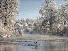 Ice Swans 1