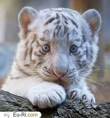 tumblr animais fofinhos - Pesquisa Google
