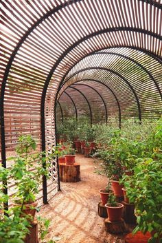 Venture to far-flung South Africa to tour the beautiful Babylonstoren garden estate. (Photography Micky Hoyle) I want this walk way in the gardenl*** Garden Structures, Garden Paths, Outdoor Structures, Herb Garden, Outdoor Projects, Garden Projects, Dream Garden, Home And Garden, Shade House
