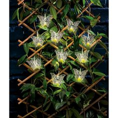 Brights Silver Butterfly String Lights