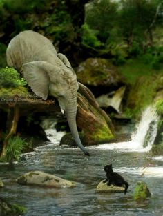 A baby elephant trying to reach a stranded kitten