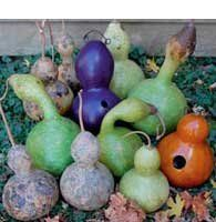 """Seed Savers Exchange 770 Open Pollinated Gourd Seeds, Birdhouse, 25 Seeds Packet by Seed Savers Exchange. $5.88. 95-110 Days to maturity. Vigorous 15-35' vines. Light green fruits with rounded necks and bowls grow 14-inch tall and 12-inch in diameter. Dried gourds make excellent birdhouses. Lagenaria siceraria Sow seeds outdoors after the danger of frost has passed in 12"""" diameter hills. Space hills 6' apart in all directions. In short season areas, grow from transplants ..."""