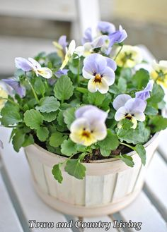 How To Plant Low Maintenance Full Blooming Flowers in Containers !