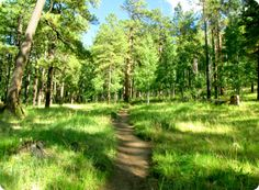 Greer, AZ - little community in the White Mountains; fishing, hiking, shops, dining, hotels...