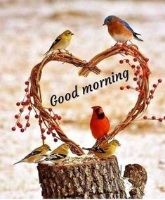 Good Morning Angel, Good Morning Happy Sunday, Good Morning Cards, Good Morning Picture, Good Morning Friends, Good Morning Messages, Good Morning Greetings, Morning Quotes, Good Morning Images Flowers